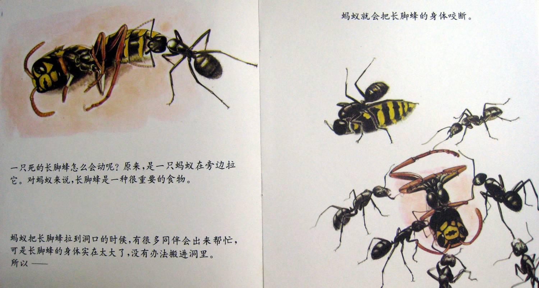 上周在观察蚂蚁的过程中,孩子们对小蚂蚁产生了浓厚的兴趣